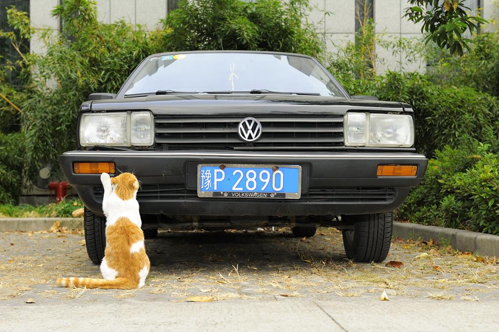 chat et voiture